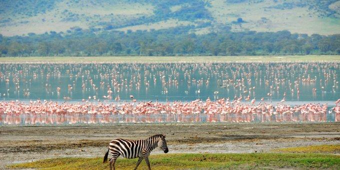 Tanzanija, Pažintinė kelionė